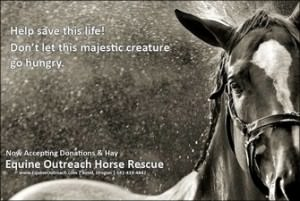 This car donation story benefited Equine Outreach. Image of horse with text help save this life. don't let this majestic creature go hungry. now accepting donations and hay. Equine Outreach horse rescue.